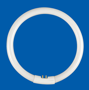 T5 Circline Fluorescent